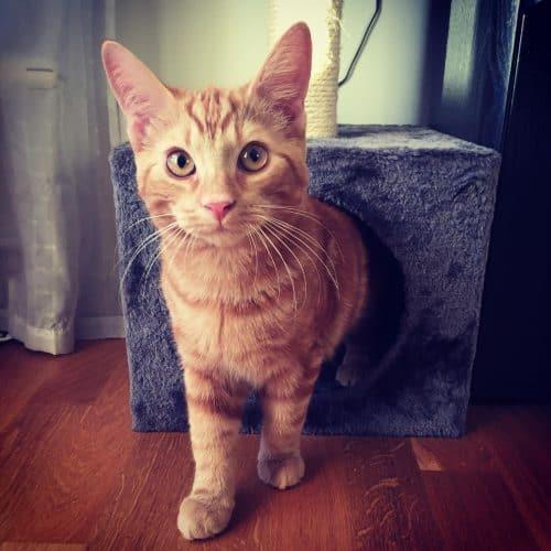 Orange katt, Fjodor. Min lilla kompis.