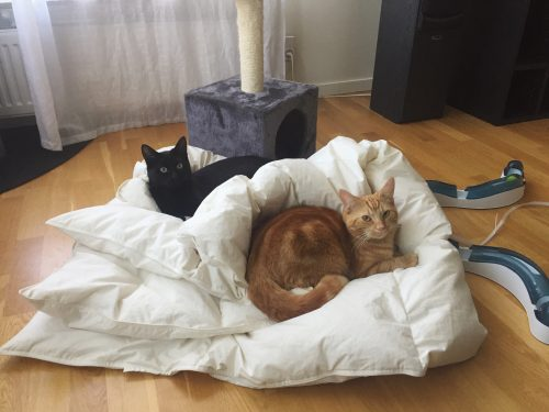 Katter i täcke, Fjodor och Finkel