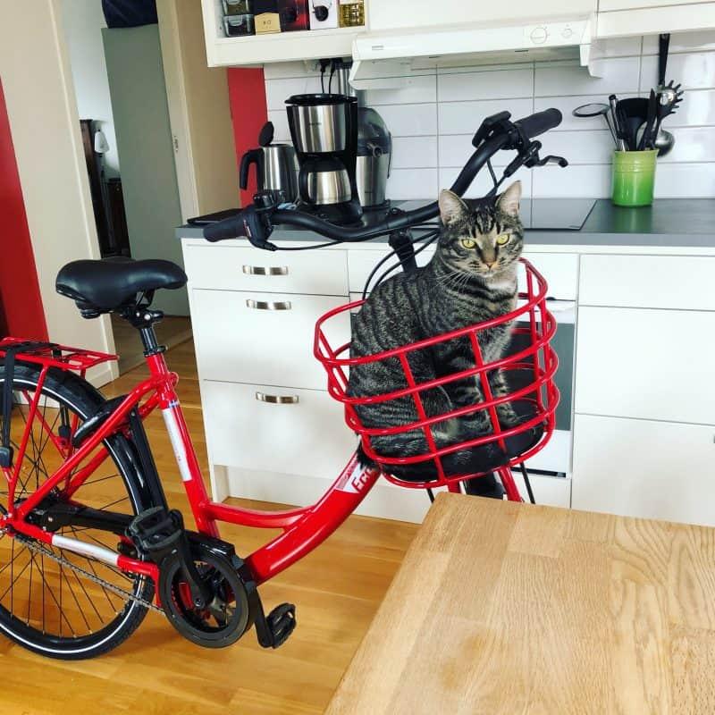 Röd elcykel, Ecoride Ambassador, med en grå katt i cykelkorgen